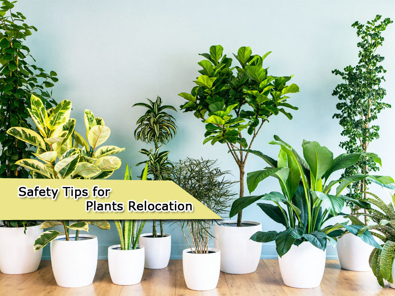 Safety Tips for Plants Relocation