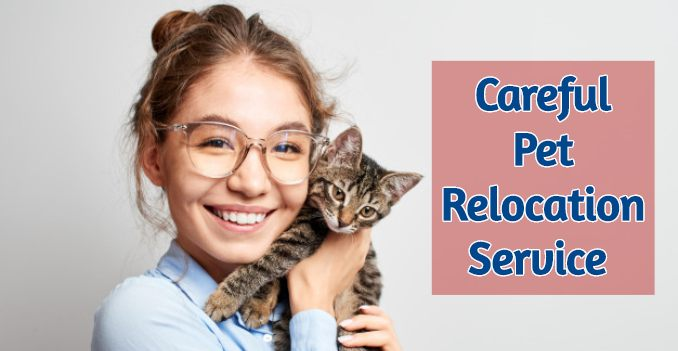 Safety Tips for Pet's Relocation