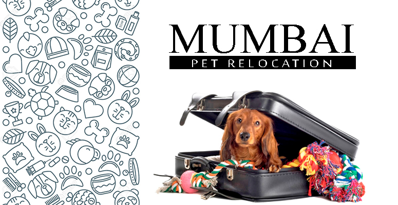 Pet Relocation Service in Mumbai