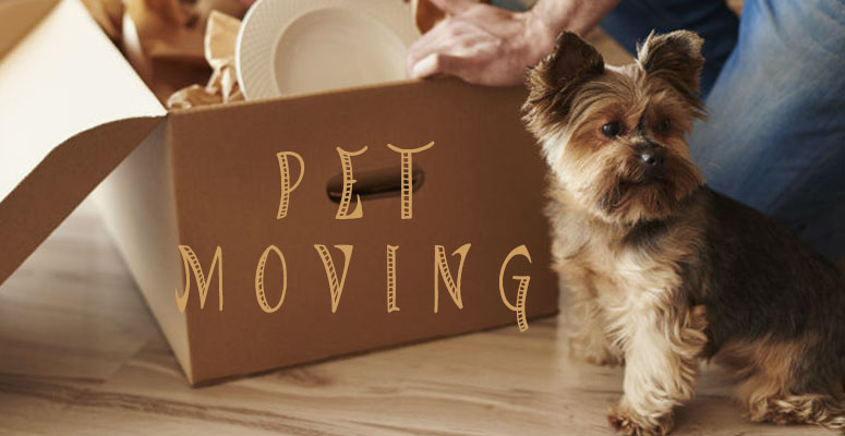 Easy-to-Follow Pet Moving Tips